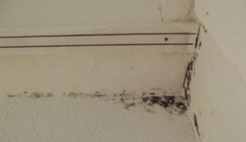 رفع نم و رطوبت دیوار(حمام،سرویس بهداشتی،آشپزخانه)بدون خرابی با دستگاه